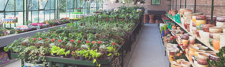 Pálmaház Kertészet